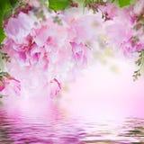Kwiecisty tło róże Obrazy Royalty Free