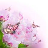 Kwiecisty tło róże Zdjęcie Stock