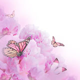 Kwiecisty tło róże Zdjęcia Royalty Free