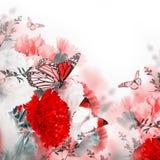 Kwiecisty tło róże Zdjęcia Stock