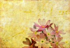 kwiecisty tło wizerunek Fotografia Stock