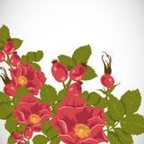 Kwiecisty tło z dzikim wzrastał, brier royalty ilustracja