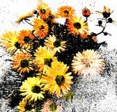 Kwiecisty tło z stylizowanym bukietem chryzantemy paskować na grunge, pobrudzony tło w czarnym, biały, kolor żółty barwi ilustracji