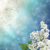 Kwiecisty tło Zdjęcie Royalty Free