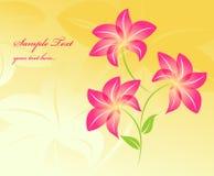 kwiecisty tło kwiat Zdjęcia Stock