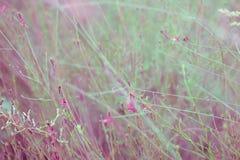 Kwiecisty tło w delikatnych brzmieniach Zdjęcia Royalty Free