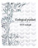 Kwiecisty tło z geometria elementami dla eco produktu etykietki lub, graficzna ilustracja Zdjęcie Royalty Free