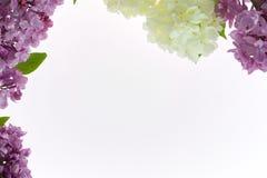 Kwiecisty tło z purpurowym syringa i kwiatami snowball pl Fotografia Royalty Free