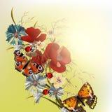 Kwiecisty wektorowy tło z śródpolnymi kwiatami Fotografia Royalty Free