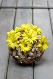 Kwiecisty wiosna skład Zdjęcia Royalty Free