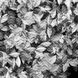 Kwiecisty woodcut pojęcie Obrazy Royalty Free