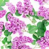 Kwiecisty wzór bez i liście na białym tle Mieszkanie nieatutowy, odgórny widok Wiosna czasu wzór Obrazy Stock
