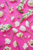 Kwiecisty wzór biali kwiaty i pączki na menchiach Mieszkanie nieatutowy, odgórny widok szczegółowy rysunek kwiecisty pochodzenie  Obrazy Stock