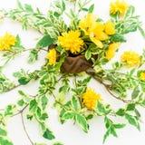 Kwiecisty wzór robić gałąź z liśćmi i kolorów żółtych kwiatami na białym tle Mieszkanie nieatutowy, odgórny widok szczegółowy rys Obraz Stock