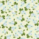 Kwiecisty wzór z małymi błękitnymi kwiatami Obraz Stock