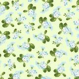 Kwiecisty wzór z małymi błękitnymi kwiatami Obrazy Stock
