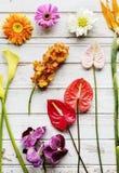 Kwiecistych liści dekoraci świeżości romansowy bujny Obraz Royalty Free