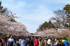 Kwietnia 2015 Czereśniowych okwitnięć festiwal w Zhongshan parku - Qingdao, Chiny - Zdjęcia Stock