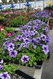 Kwietnikowe rośliny w kolorze 5 Obraz Royalty Free