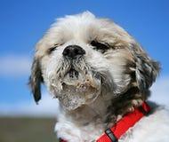Kwijlende hond stock foto's