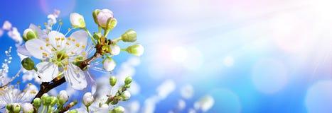 Kwitnąć W wiośnie - migdałów okwitnięcia obrazy royalty free