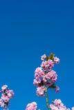 Kwitnąć drzewa w parku Obraz Royalty Free