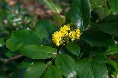 |Kwitnąć drzewa w parku Zdjęcie Stock
