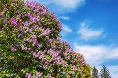 Kwitnąć drzewa w wiosna ogródzie Zdjęcia Stock