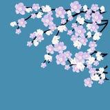 Kwitnąć gałąź na błękitnym tle Obrazy Stock