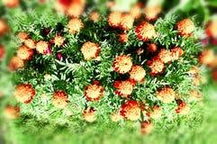 Kwitnąć kwiatu tła dekoracyjnego wizerunek Obrazy Royalty Free