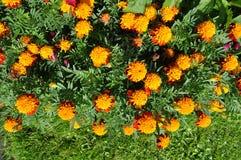 Kwitnąć kwiatu tła dekoracyjnego wizerunek Obrazy Stock