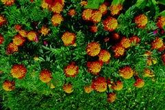 Kwitnąć kwiatu tła dekoracyjnego wizerunek Obraz Stock