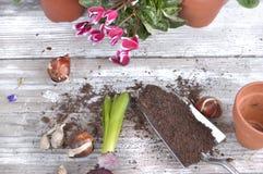 Kwitnąć kwiaty i żarówki dla puszkować zdjęcie royalty free