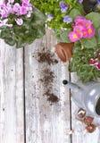 Kwitnąć kwiaty i żarówki na stole obraz royalty free