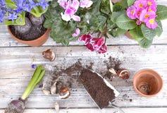 Kwitnąć kwiaty i żarówki na stole obrazy royalty free