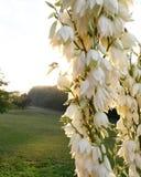 Kwitnąć kwitnie w ranku słońcu Obraz Stock