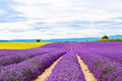 Kwitnąć lawendy i słonecznika pola w Provence, Francja Fotografia Stock