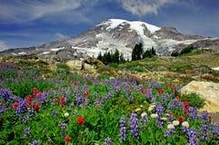 kwitnąca łąka zdjęcia royalty free