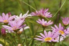 Kwitnąca łąka Fotografia Royalty Free