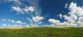 Kwitnąca łąka Obrazy Stock