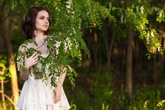 Kwitnąca akacja zdjęcie royalty free