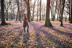 Kwitnąca natura, krokusy, młody podróżnik obrazy stock