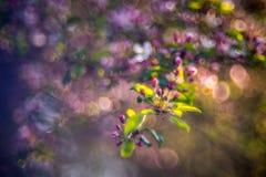 kwitnąca okwitnięcia natury wiosna świerczyna fotografia royalty free