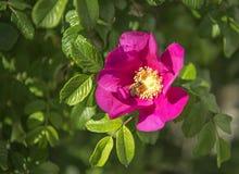 kwitnąca okwitnięcia natury wiosna świerczyna Obrazy Stock