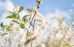 Kwitnąca roślina Fotografia Royalty Free