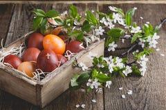 Kwitnące śliwek gałązki i Wielkanocni jajka Fotografia Stock