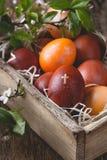 Kwitnące śliwek gałązki i Wielkanocni jajka Obraz Stock