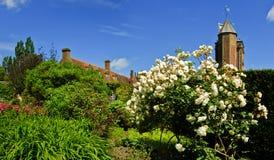 kwitnące róże Zdjęcia Stock
