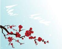 kwitnący śliwkowy drzewo Obraz Royalty Free