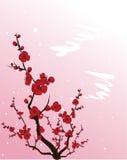 kwitnący śliwkowy drzewo Obraz Stock